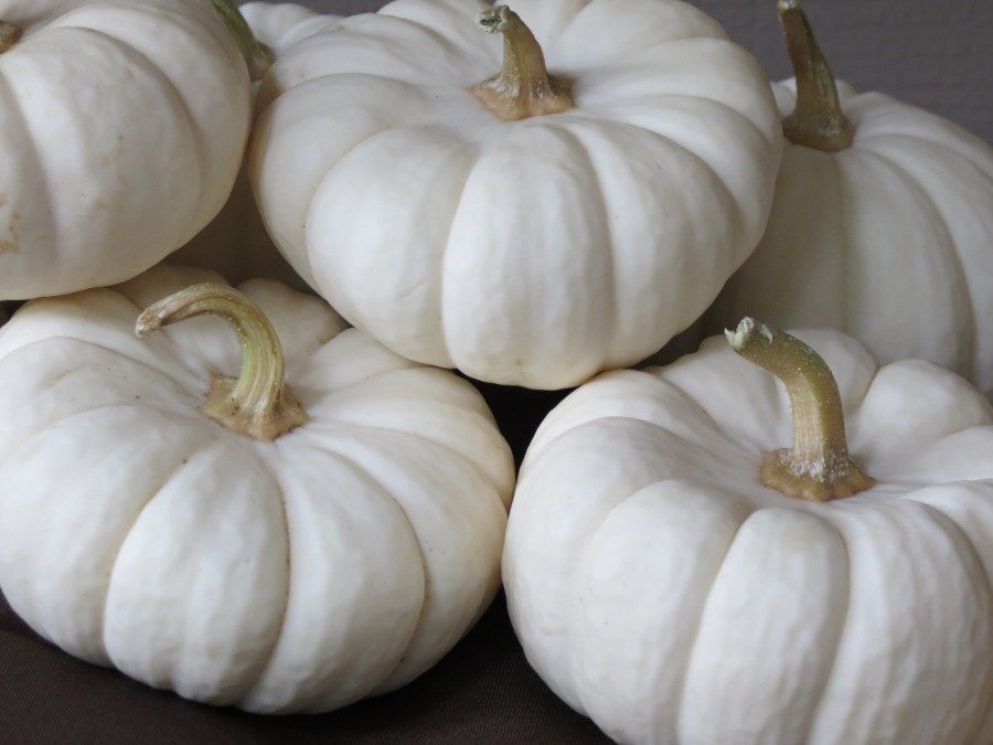 White+punpkins+are+all+the+rage+this+Halloween+season.+Use+crayons+and++a+hairdryer+for+a+creative+twist+without+the+knife.
