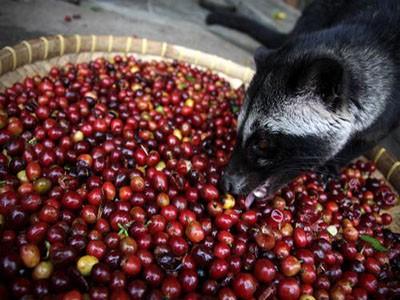 Cat Poop Coffee comes to Quartermaine