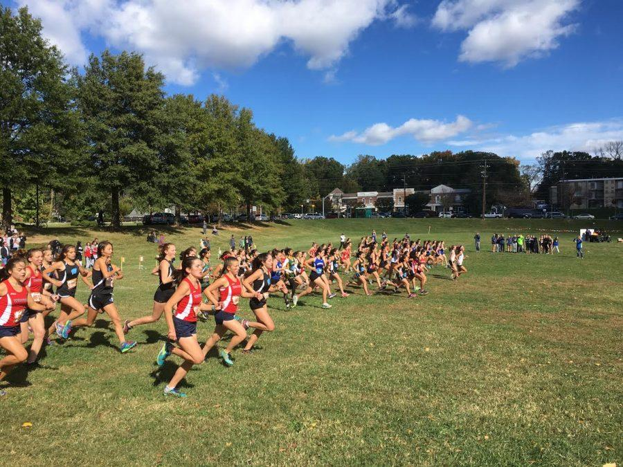 Cross country team speeds through the season, finishes strong