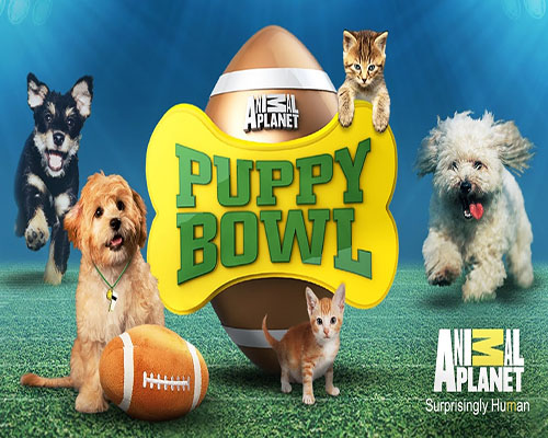 Puppybowl over Superbowl