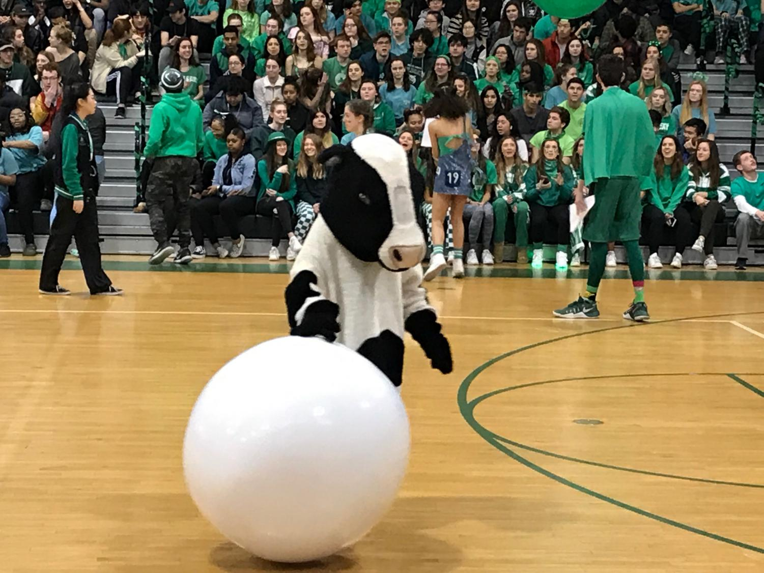 Shelly the Mad Cow at a recent pep rally. As she looks down, she decides to contemplate why she ever thought some of her life choices were good ideas.