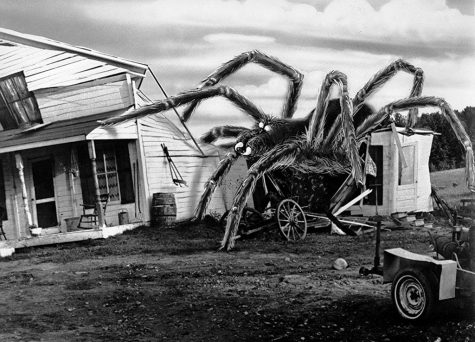 "Pictured above is one of the many gargantuan arachnids to appear in ""The Giant Spider Invasion"", that is sure to evoke dread, terror, and despair from all who encounter it."