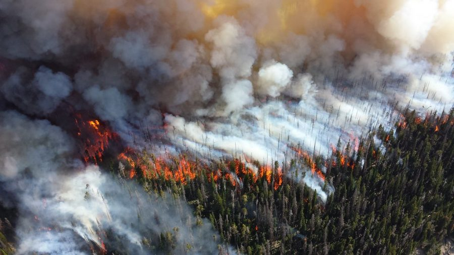 In a gender reveal in California that went disastrously wrong, a pyrotechnic device malfunctioned, which led to wildfires that have dislocated thousands of people.