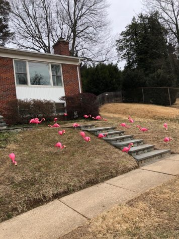 "A recently ""flocked"" lawn. Flocking raised $1,880 dollars for Pennies 4 Patients this February."