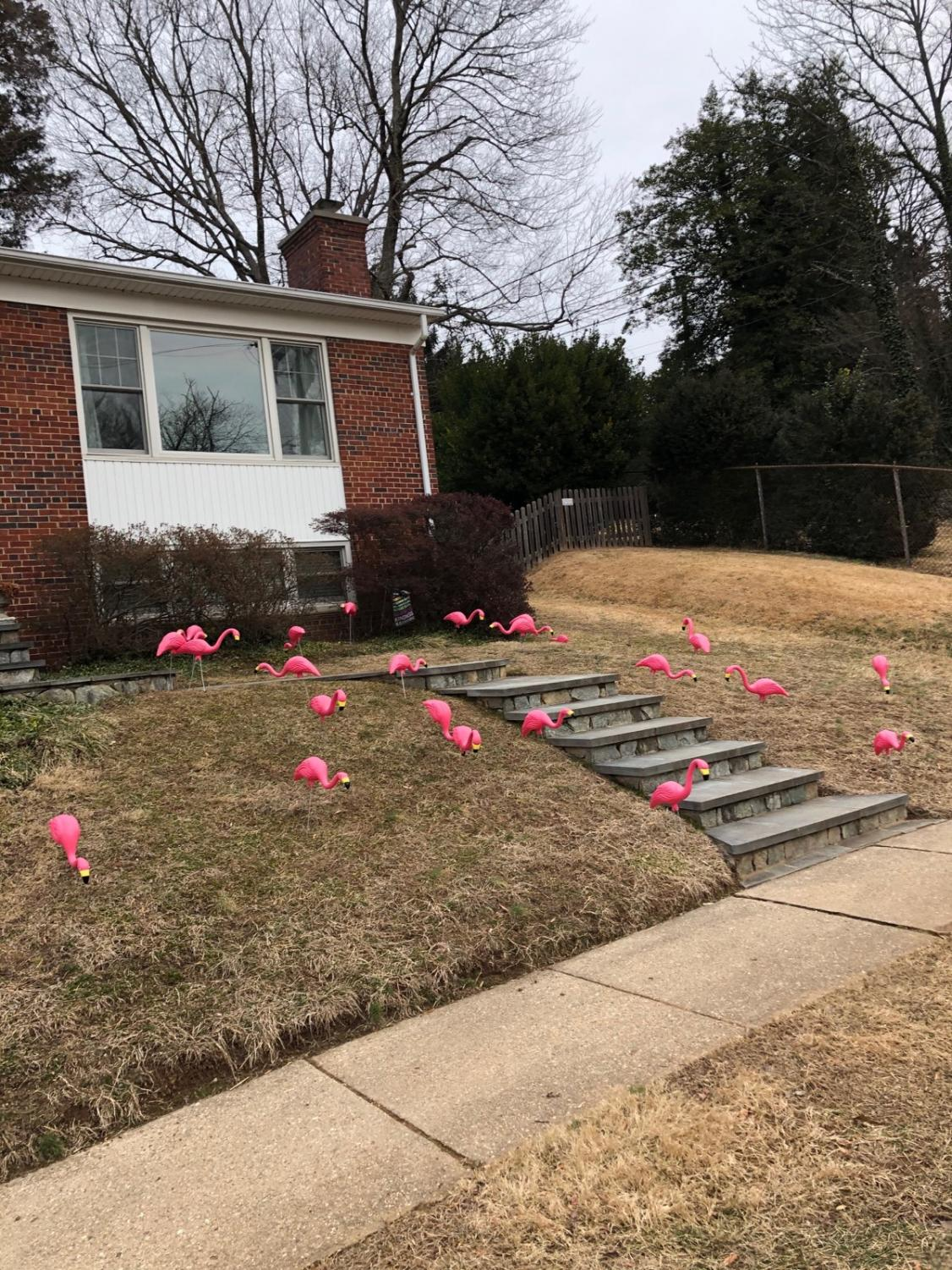 """A recently """"flocked"""" lawn. Flocking raised $1,880 dollars for Pennies 4 Patients this February."""