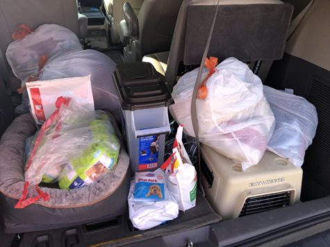 Liann Keren collects early donations on Saturday, March 20. She will be hosting a donation drive for Lucky Dog Animal Shelter to support animals who have been suffering during the pandemic.