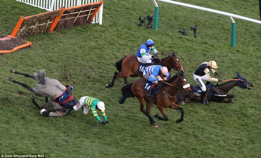 One year during the Fred Juvenile Handicap Hurdle race, Jockey Ruby Walsh's horse, Voix Du Reve (right) fell. Jockey Berry Geraghty's horse, Campeador (left), also fell during this race.